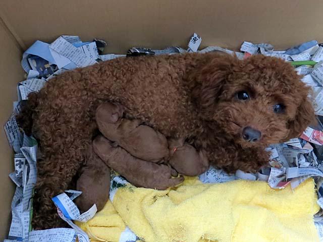 子犬が産まれました